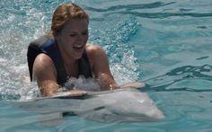 Sea Life Park Royal Dolphin Swim | Swim With Dolphins Hawaii | Dolphin Swim Oahu