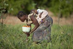 Togo: A woman working in a tomato field.  ©FAO/Giulio Napolitano  www.fao.org