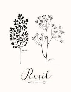 Persil by Eva Juliet.