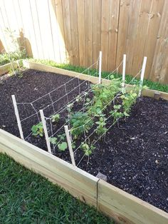 Home-made trellis for green beans and cucumbers.