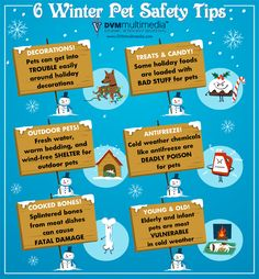 6 Winter Pet Safety