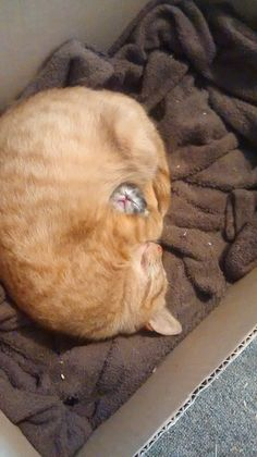A new mama cat guarding her first and only baby.