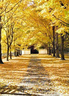 East coast in the fall