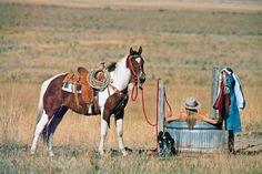 cowgirls, paint horses, hot days, hot tubs, art print