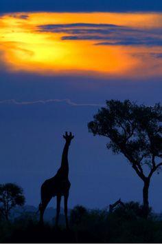 Sunset in giraffe, Kruger National Park, South Africa