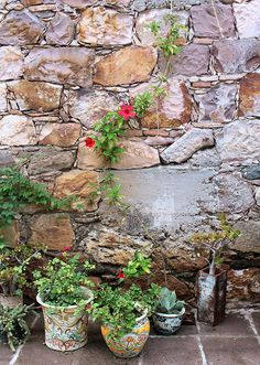 Stone wall with plants.