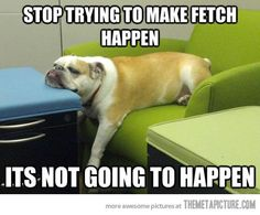 """""""Stop Trying to Make Fetch Happen"""".  -Regina George to Gretchen Weiners -and this bulldog to the world."""