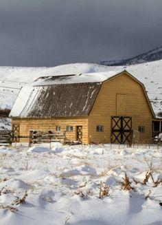 hors, color, yellow barn, old barns