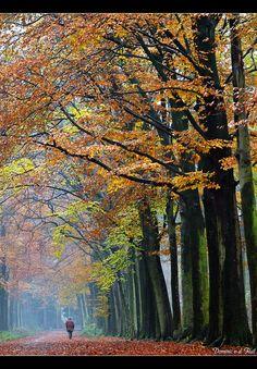 I love to walk, I love the fall.....Autumn walk