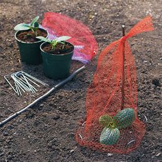 Quick seedling cover - Don't find another veggie plant that's been nibbled away! With this easy netting system, you'll stop critters from devouring or digging up your seedlings. Good Idea!