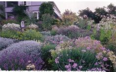 lavendar sage and yarrow garden (Dry Climate Gardening - Orthos) by lynetter, via Flickr
