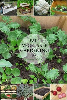 How to get started with cold weather vegetable growing - grow your own year round! #spon