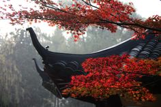 Red leaves thriving beside West Lake. #redleaves #autumn #westlake