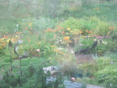 through window  during rainstorm ~ Gardens at Waters East.