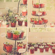 succulent party favors!