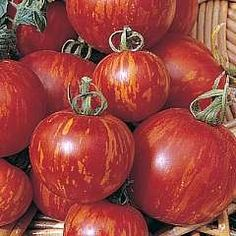 Tigerella Tomatoes - these interesting striped tomatoes also have a unique, gloriously tangy flavour.