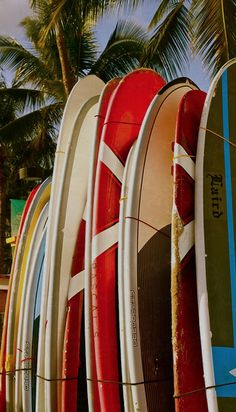 surf boards...