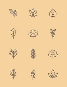 New York State Leaf Pictograms | James McDonough
