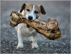 Dogs love chewing on bones !