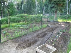 My wife, Julie, swears the plants in the veggie garden grew 2 inches today (June 25, 2012).