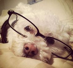 cutest librarian ever.