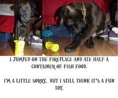 Adoptable Arnold > thank you Dog Shaming!
