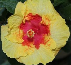 How to overwinter Tropicals? See gardening tips on overwintering tender and tropical plants from the Almanac garden blogger.