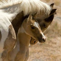 Very beautiful mare and foal.!