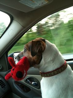 Dog + ride + toy = happiness