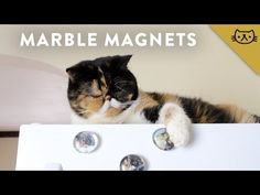 DIY Glass Marble Photo Magnets -- Pudge it Yourself - YouTube