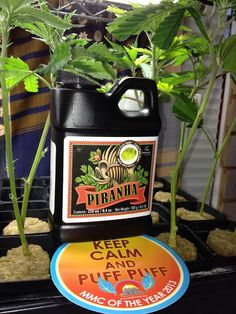 Piranha - Advanced Nutrients Liquid Microbial Use Piranha to increase the size and efficient of your plants roots! Roots are the foundation of your plant's ability to intake water and nutrients so they grow well and produce the valuable flowers you so very much enjoy  $51.27