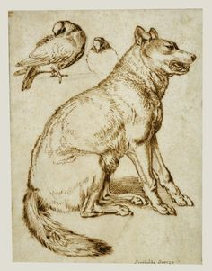 Sinibaldo Scorza [Italian, 1589 - 1631], A Wolf and Two Doves, Italian, about 1610 - 1620, Pen and brown ink over black chalk, 24.1 x 18.4 cm