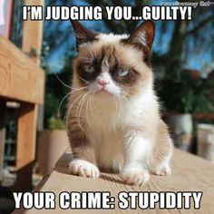 Twitter / RealGrumpyCat: I'm judging you... ...