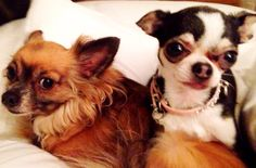 Happy National Dog Day from our home to yours. Give your babies and extra hug and kiss today!