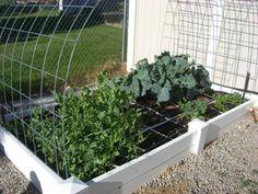Square foot garden blog