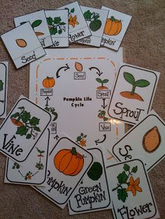 Pumpkin Life Cycle Printables