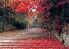 red, winter holidays, holiday destinations, leav, path, autumn falls, road, place, art pieces