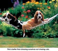 """""""It's stressful chasing cats!"""""""
