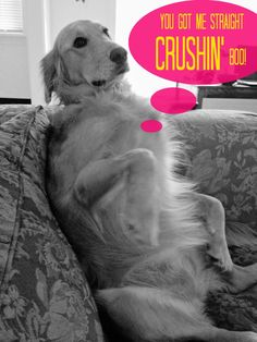 You Got Me Straight Crushin', Boo. {Volume One}