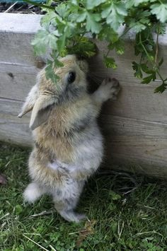 just a little nip of parsley!