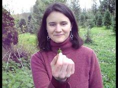 Harvesting stinging nettles...