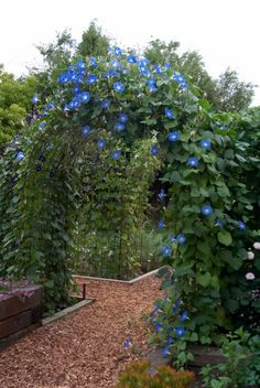 """DIY Garden Arbor (""""This is two 20-foot rebar pieces bent into arches, with pig fencing welded in between."""")"""