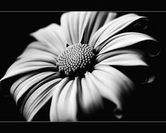 Black/White - Flower