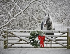 Horse by a snowy fence at Christmas time!