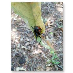 Black spider post card