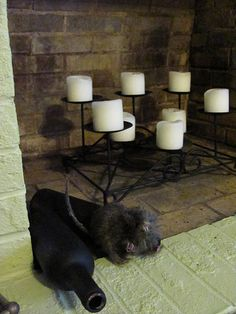 Creepy Fireplace with Wine Bottles and Fake Rat