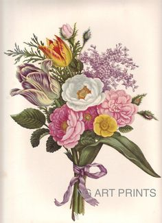 Vintage Flower Print, Large Rose Botanical Print, Oversized Botanical Wall Art, Redoute Style Print, John Henry Hopkins Wall Hanging