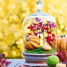 We love this charming glass cloche display! Use it as a centerpiece this Thanksgiving: http://www.bhg.com/halloween/decorating/creative-fall-centerpieces-featuring-natural-elements/