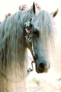poni, anim, horses, dream, fairy tales, white, fairi, beauti, flowers