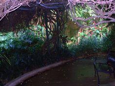 A walk through passage among plants in Sunken Gardens in St. Pete, FL